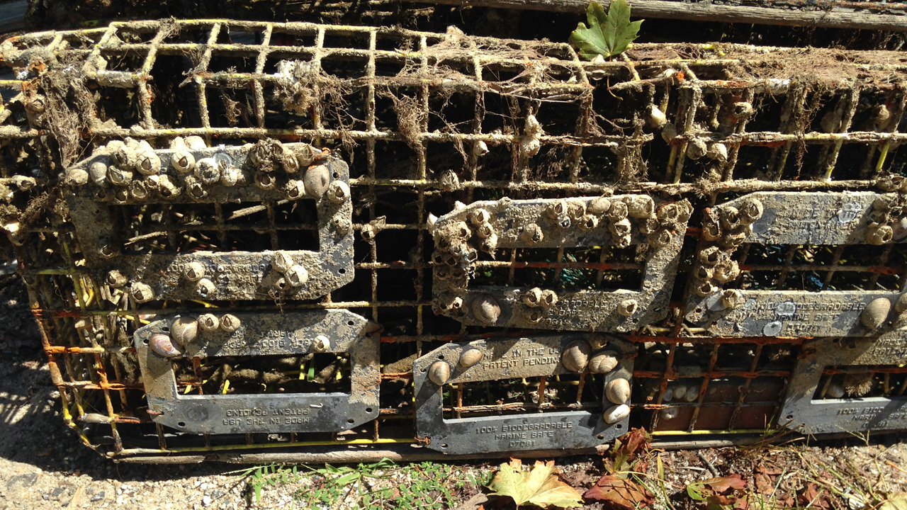 lobster trap with biodegradable escape panel